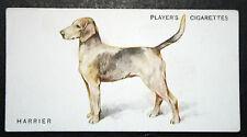 Harrier  Hunt Pack Dog     Original Vintage  Colour Card  # VGC