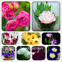 100 Pcs Seeds Eustoma Bonsai Perennial Plants Balcony Potted Flowers Garden NEW