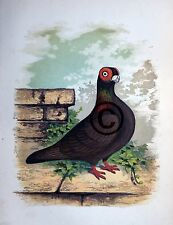 "Fancy Pigeon "" THE BURB  "" By James C. Lyell Poster Art 13"" X 19"""