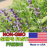 100 Heirloom Sage Seeds | Non-GMO Organic Herb Garden Seeds | Free Shipping USA