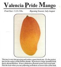 New listing Valencia Pride Mango Tree 3 Gal Potted Tree