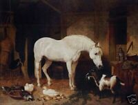 ZWPT923 100% painted hand horse sheep ducks modern oil painting art on Canvas
