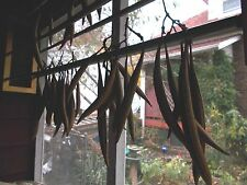 8 Dried Trumpet , or Hummingbird Vine, orange/ red flower Seed Pods.