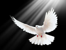 WHITE PEACE DOVE GLOSSY POSTER PICTURE PHOTO LOVE GOD HOLY SPIRIT FLYING BIRD