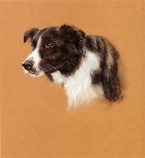 BORDER COLLIE WORKING SHEEPDOG DOG ART LIMITED EDITION PRINT - Head Study