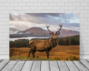 STUNNING SCOTTISH HIGHLAND RED DEER STAG CANVAS #84 WILDLIFE WALL ART PICTURE