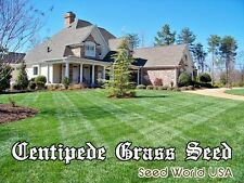 "Centipede Grass Seed "" 100% Pure Raw Seeds "" 1 Lbs Bag 2000 Sq.ft. Coverage"