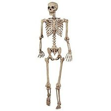Anatomical Model Human Skeleton Life Size 5' Medical Teaching Anatomy Halloween