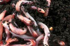 Kompostwürmer Regenwürmer Gartenwürmer (1000 Stück)