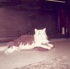 Original Vintage 1961 Cat RP-  White and Brown Cat Plays with String- Piano