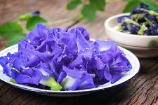 Butterfly Pea Flower Dried Herb Thai Tea Healthy Drink Coloring Food Antioxidant