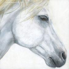 "Cavalia Odysseo White Horse Profile 8"" x 8"" art artwork PRINT Brandy Woods"