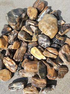Petrified Wood Lot Rough From Montana