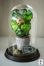 Sculpture Contemporaine Curiosité Sous Globe Pièce Unique Artiste KRISTOF