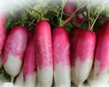 200 pcs Red and white skin radish Radish green vegetable seeds