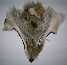 5 Coyote Fur Faces