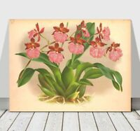 """JEAN LINDEN - Beautiful Pink Orchid #41 - CANVAS PRINT POSTER - 12x8"""""""
