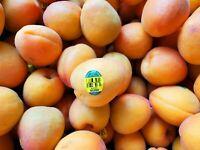 Organic apricots, fresh fruits, 1lb, USA-grown, PLU 93302