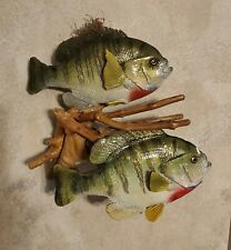 """Double Bluegill Fish Taxidermy. Two Giants of 10"""" each Fly Fishing, replicas"""