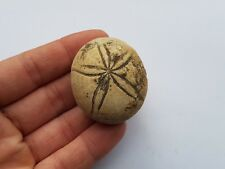 Oursin fossile de Gironde 64g / Urchin fossil France stone marine marin