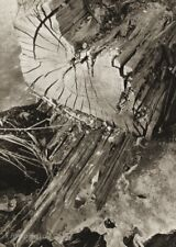 1934/56 Vintage Josef Sudek Wood Stump Detail Nature Original Photo Gravure Art