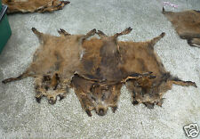 Wild european big boar skin fur rug hide collectible fireplace (set of 10 furs)
