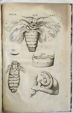 1686 Marcello Malpighi Bombyce Silkworm Dissertation 12 Plates Microscopic Study