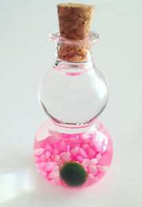 Baby Marimo Moss Ball Lucky Plant in Glass Bottle w Mixed Pink Aquarium Sand