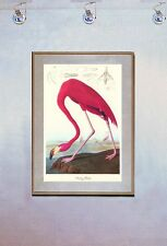 Audubon American Flamingo 15x22 Hand Numbered Ltd. Edition Art Print