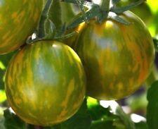 GREEN ZEBRA Tomato Striped Stripes Gold Yellow Green Beautiful Heirloom 30 Seeds
