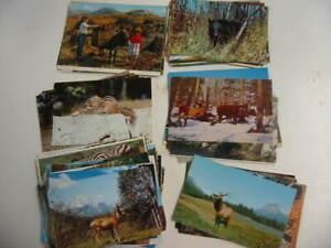200 Animal Postcard Lot