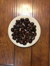 500 Chestnut Seed/ Nuts from dunstan chestnut tree.