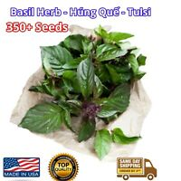 Thai Red Holy Basil Seeds 1/8 Krishna Tulsi - Ocimum Sanctum 250+ Húng quế Herb