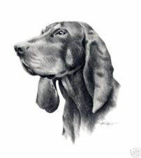 Black And Tan Coonhound Dog Pencil 8 x 10 Art Print by Artist Djr