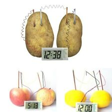 Lovely Cute Potato Clock Science Project Experiment Kit kids Lab Home School Toy