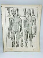 Antique large print HC 1843.Oken's Naturgeschichte Plate 3 Anatomy Muscles Body