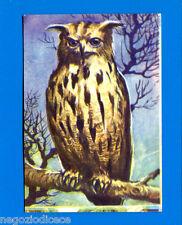 ANIMALI - Lampo 1964 - Figurina-Sticker n. 214 - GUFO REALE -New
