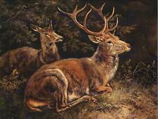 "PITTURA ANIMALI gruppo Portrait SCHLEICH RED Deer 12x16"" art print lah405b"