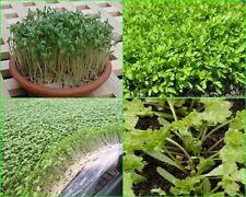 20,000  Seeds of  Curled Garden Cress,  Lepidium sativum,  for 2017 planting