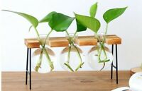 Wooden Propagation Station Hydroponic Tabletop Three Plant Vases