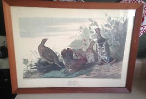 """Vintage Audubon Spruce Grouse R Havell Print In Wood Frame  21 1/2"""" X 15 1/2"""""""