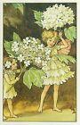 A1525cgt Cute Cicley Barker Flower Fairies Geulder Rose Tree Fairy postcard