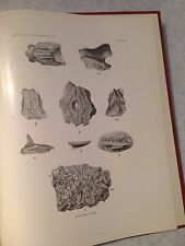 Paleontology Fossil Lizards North America by Gilmore Rare 1st Herpetology