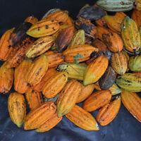 40 Stücke Kakao Obst Samen 100% Keimung Frische Samen Hausgarten-anlage C-*