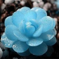 300pcs Succulents Seeds Potted Flower Seeds Home Garden Office Decorative ML