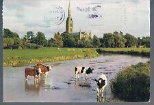 Salisbury Printed Collectable Wiltshire Postcards