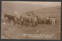 Postcard Shetland Islands Scotland view of Ponies on the Hill Tops RP