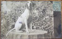 Family Dog 1906 Realphoto Postcard - Postally-Used in France - Garden View
