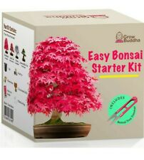 Grow your own bonsai starter kit with Grow Buddha