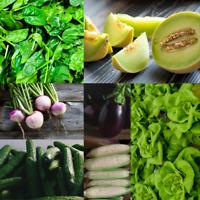 350+ Heirloom Vegetable Seed 7 Variety Garden Set #4 Emergency Survival Non-GMO